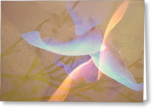 Muted Mauve Greeting Cards - Flight Greeting Card by Shirley Sirois