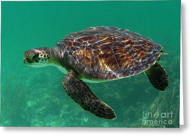 Undersea Photography Greeting Cards - Float Greeting Card by Li Newton