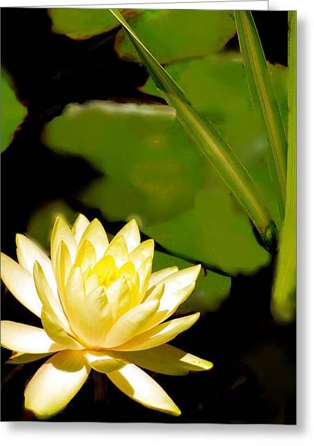 Garden Flower Vision Greeting Cards - Float Of Elegance  Greeting Card by Debra     Vatalaro