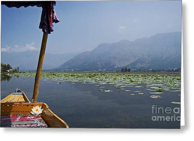 Dal Lake Greeting Cards - Floating Adventure... Greeting Card by Nina Stavlund