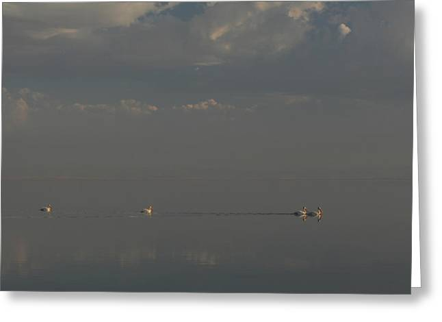 Salton Sea Greeting Cards - Floating Along Greeting Card by Laurie Search