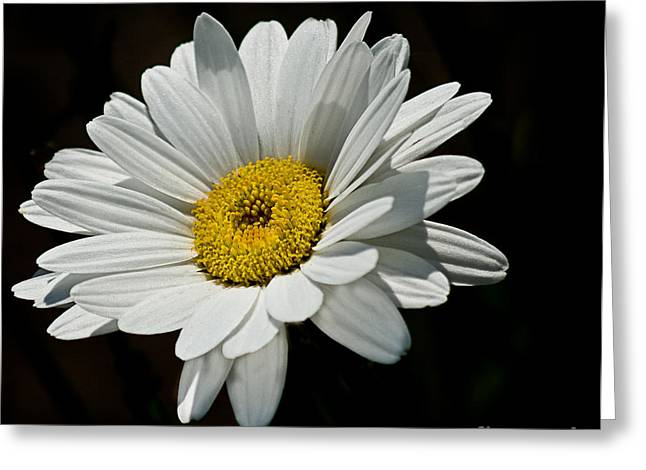 Floating Daisy Greeting Card by Robert Bales