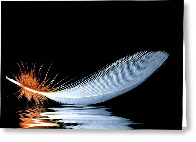 Jean Noren Greeting Cards - Floating Feather Greeting Card by Jean Noren