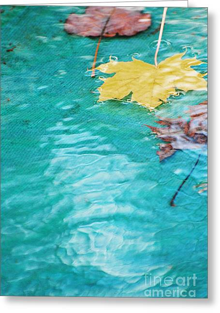 Waterscape Mixed Media Greeting Cards - Floating Leaves Greeting Card by adSpice Studios
