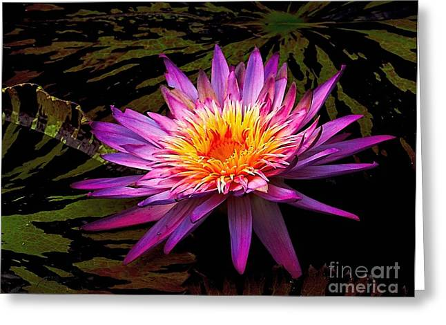Aquatic Greeting Cards - Floating Lily Greeting Card by Nick Zelinsky