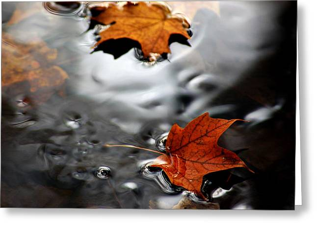 Nature Center Pond Greeting Cards - Floating Maple Leaves Greeting Card by LeeAnn McLaneGoetz McLaneGoetzStudioLLCcom