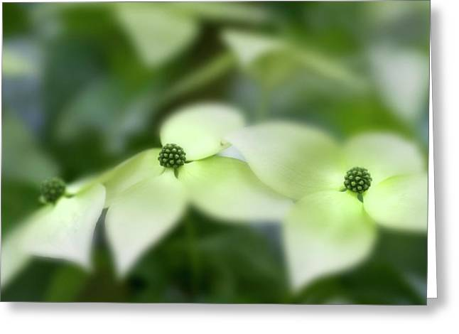 Dogwood Greeting Cards - Floating Greeting Card by Rebecca Cozart