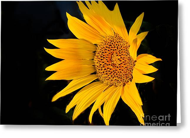 Haybale Greeting Cards - Floating Sunflower Greeting Card by Robert Bales
