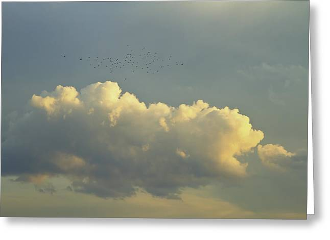 Heavenly Sunrise Greeting Cards - Flock of Bird Near Clouds At Sunset Fine Art Print Greeting Card by Keith Webber Jr