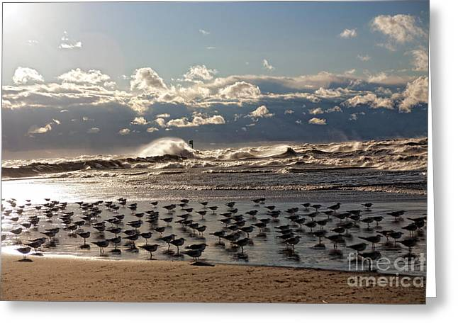 Colorful Cloud Formations Greeting Cards - Flock of Birds Gathered Near the Waves Greeting Card by Janet Lindsay