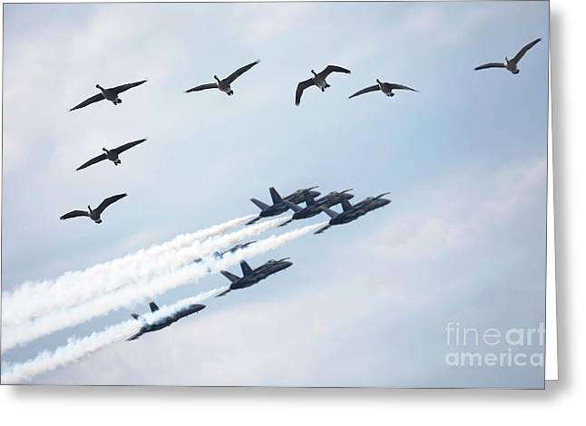 Copy Machine Greeting Cards - Flock of Canada Geese at Air Show Greeting Card by Oleksiy Maksymenko