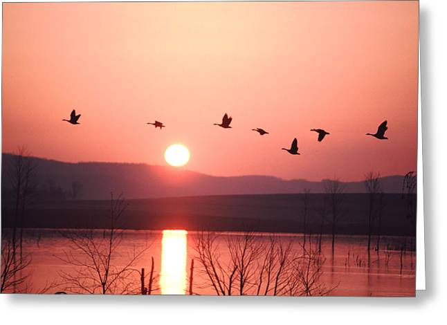 Flock Of Canada Geese Flying Greeting Card by Ira Block