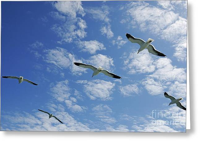 Flying Animal Greeting Cards - Flock of five Seagulls flying in the sky Greeting Card by Sami Sarkis