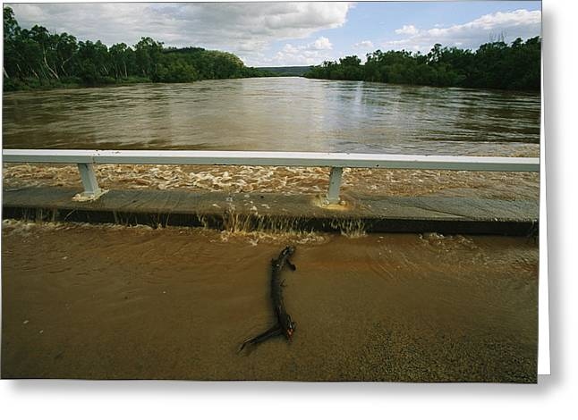 Floods Greeting Cards - Flood Waters Rise To Meet A Bridge Greeting Card by Randy Olson