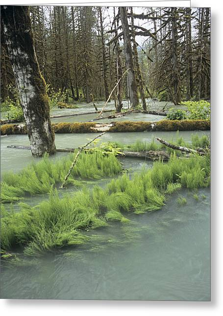 Moist Greeting Cards - Flooded Forest Greeting Card by Alan Sirulnikoff