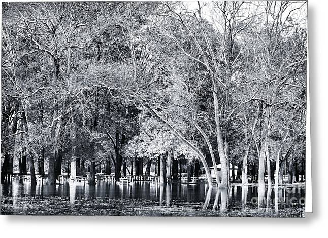 Floods Greeting Cards - Flooded Park Greeting Card by John Rizzuto