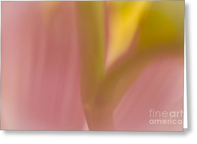Close Focus Floral Greeting Cards - Floral Abstract 2 Greeting Card by Idaho Scenic Images Linda Lantzy