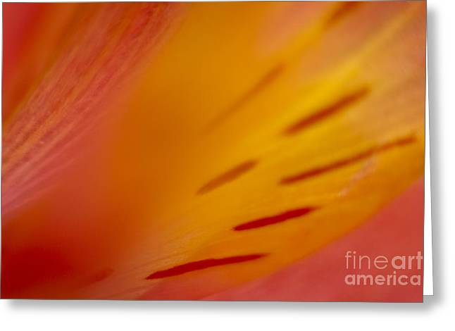 Close Focus Floral Greeting Cards - Floral Abstract 3 Greeting Card by Idaho Scenic Images Linda Lantzy
