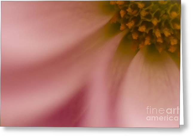 Close Focus Floral Greeting Cards - Floral Abstract 6 Greeting Card by Idaho Scenic Images Linda Lantzy