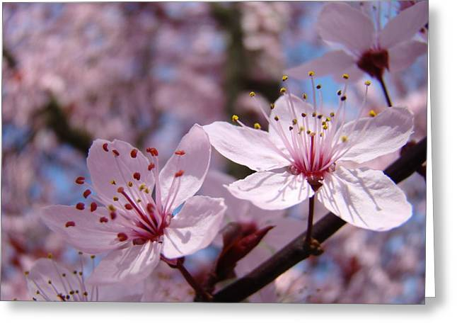 Pink Blossoms Greeting Cards - FLORAL Art Pink Spring Blossoms Prints Blue Sky Baslee Troutman Greeting Card by Baslee Troutman Fine Art Prints Collections