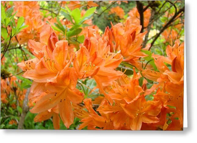Rhodies Greeting Cards - Floral art prints Orange Rhodies Flowers Greeting Card by Baslee Troutman