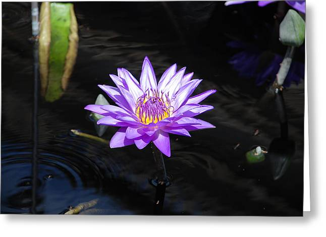 Lily Pond Greeting Cards - Floral Burst of Purple Greeting Card by Jennifer Lyon