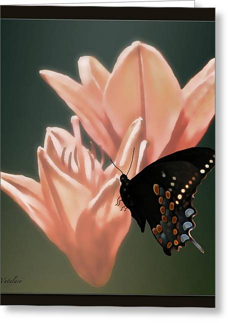 Stimulating Colored Flower Greeting Cards - Floral Butterfly Dance Greeting Card by Debra     Vatalaro