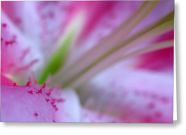 Lilly Pad Greeting Cards - Floral Close Up of a Lily Greeting Card by Juergen Roth
