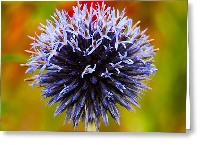 Blue Thistles Greeting Cards - Floral Colors Greeting Card by Matt Dobson