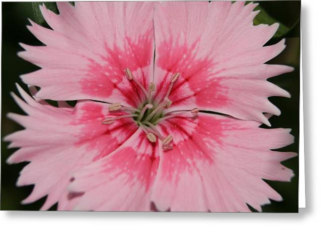 Fushia Greeting Cards - Floral Flamingo Greeting Card by Samantha Harrison