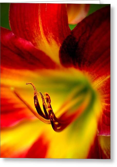 Day Lilly Greeting Cards - Floral Macro of a Blossom Greeting Card by Floyd Menezes