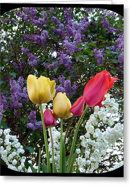 Lilac Tulip Flower Greeting Cards - Floral Profusion Greeting Card by Will Borden