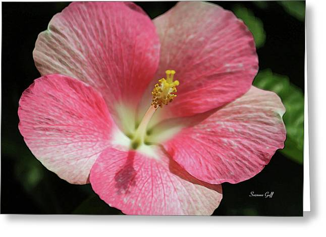 Floral Digital Art Greeting Cards - Floral Symphony in Pink Greeting Card by Suzanne Gaff