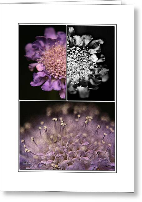Nature Study Mixed Media Greeting Cards - Floralicious  Greeting Card by Bonnie Bruno