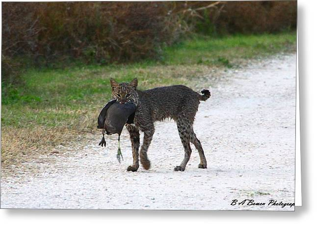 Best Sellers -  - Bobcats Photographs Greeting Cards - Florida Bobcat catches an evening snack Greeting Card by Barbara Bowen