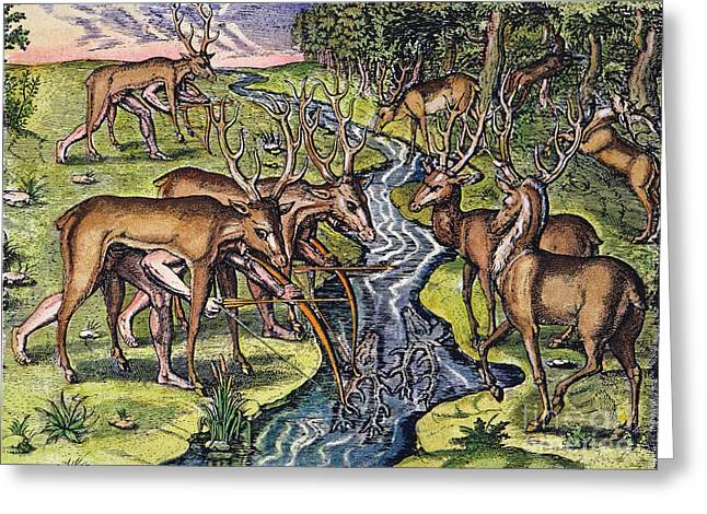 Engraving Greeting Cards - Florida Native Americans: Hunt, 1591 Greeting Card by Granger