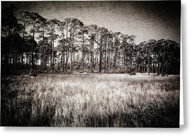 Florida Pine 2 Greeting Card by Skip Nall