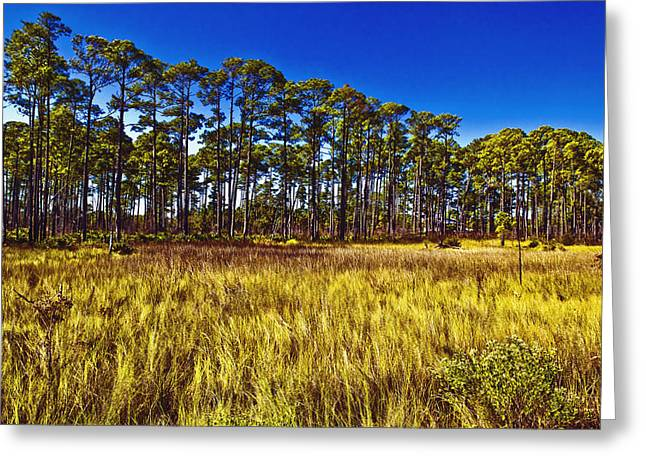 Reverence Greeting Cards - Florida Pine 3 Greeting Card by Skip Nall