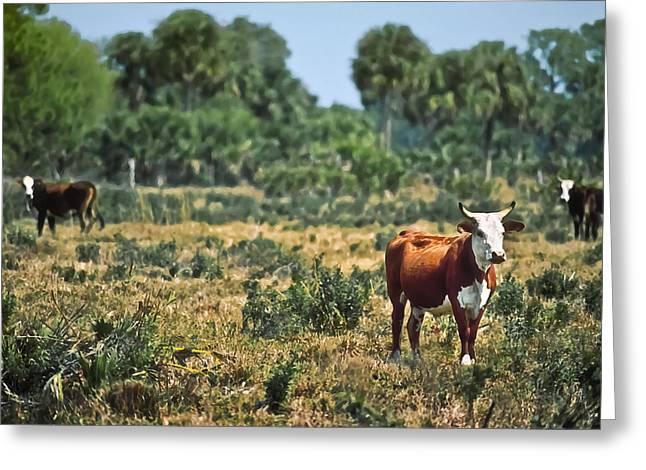 Ranch Digital Art Greeting Cards - Florida Ranch Greeting Card by Patrick M Lynch