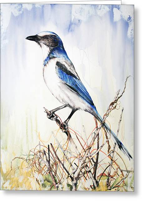 Roots Mixed Media Greeting Cards - Florida Scrub Jay Greeting Card by Anthony Burks Sr