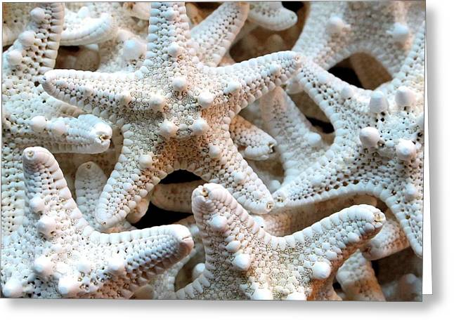 Zen Pyrography Greeting Cards - Florida Sea Stars Greeting Card by Valia Bradshaw