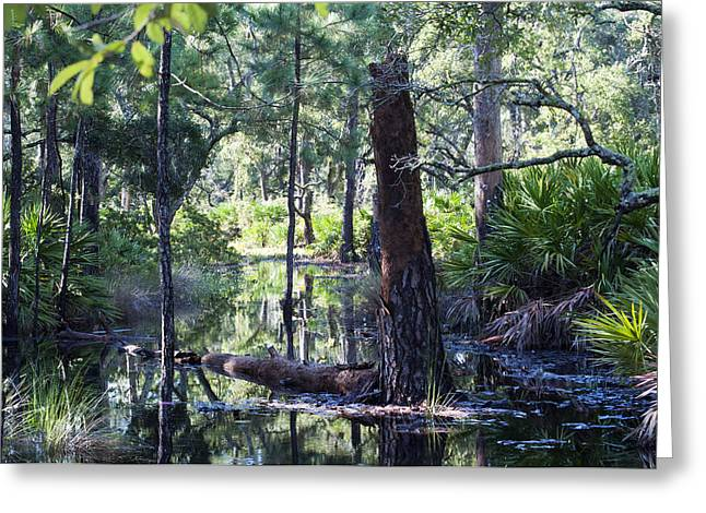 Bromeliad Greeting Cards - Florida Swamp Greeting Card by Kenneth Albin