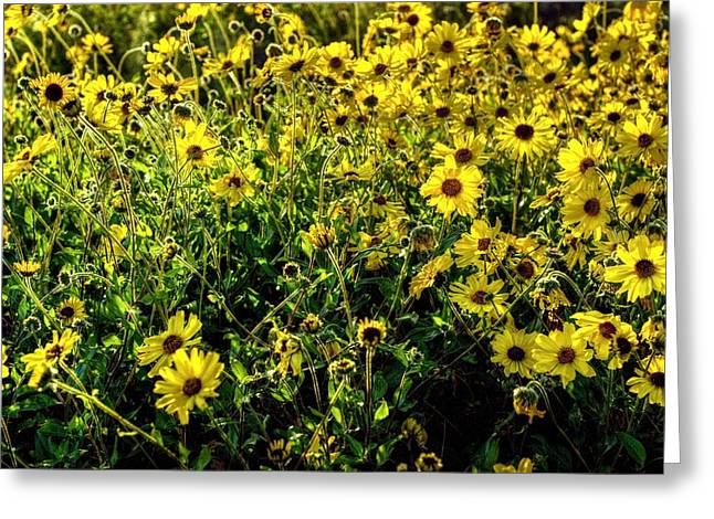 Yellow Sunflower Greeting Cards - Flourishing Fields Greeting Card by Anthony Citro