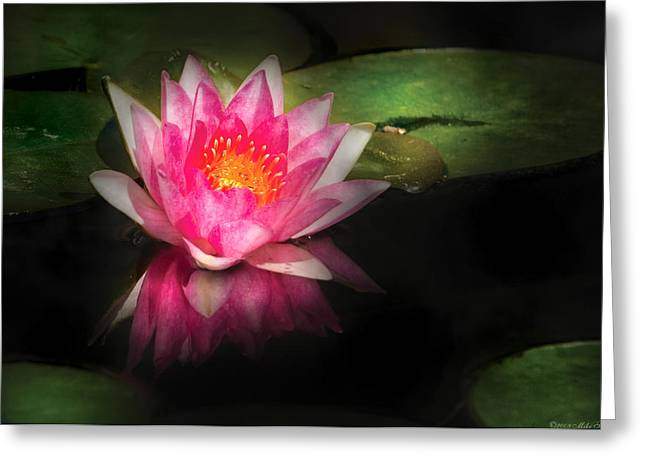Lilly Pads Greeting Cards - Flower - Lotus - Nymphaea Gloriosa - Intensity Greeting Card by Mike Savad