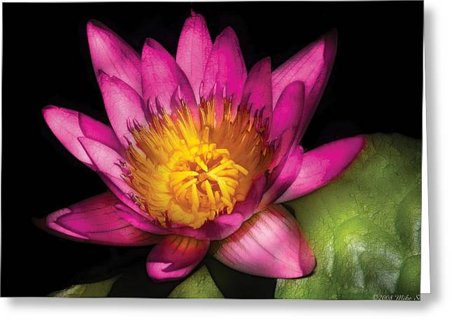 Nymphaea Greeting Cards - Flower - Lotus - Nymphaea  Ruby - Passion Greeting Card by Mike Savad