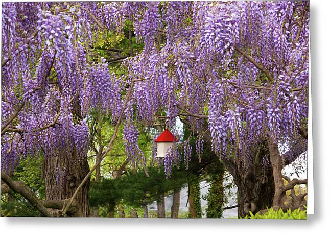 Customizable Greeting Cards - Flower - Wisteria - A house of my own Greeting Card by Mike Savad