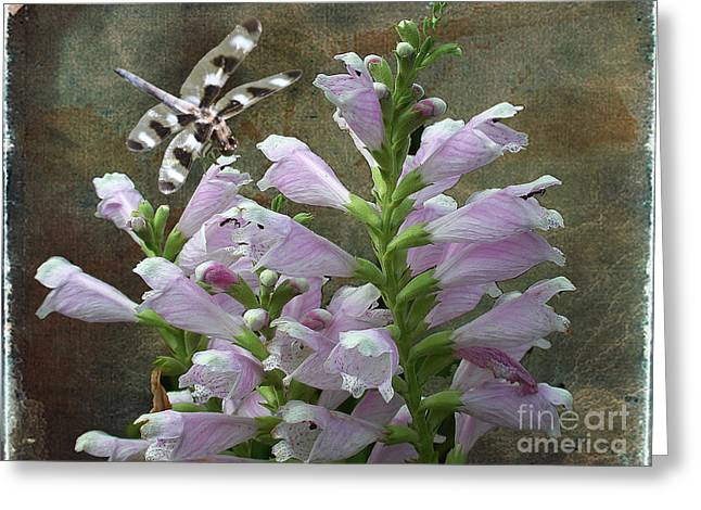 Flower And Dragonfly Greeting Card by Jim Wright