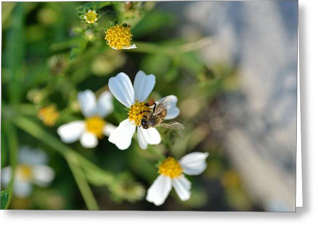 Jacksonville Arboretum Greeting Cards - Flower And Insect  Greeting Card by Ahmet Ozbek