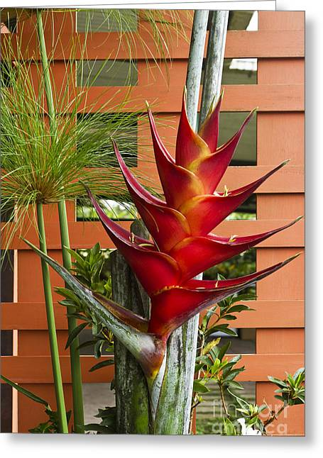 Heliconia Greeting Cards - Flower Arrangement  Greeting Card by Heiko Koehrer-Wagner