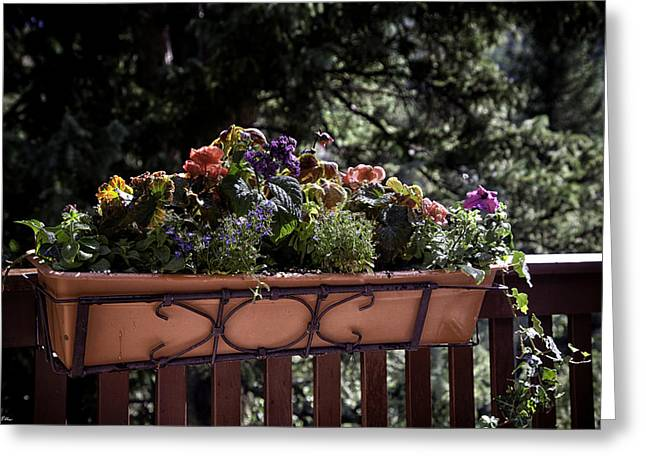Flower Boxes Greeting Cards - Flower Box Greeting Card by Madeline Ellis